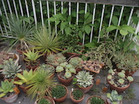 display_of_succulents-th