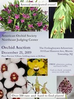 ORCHIDAUCTION