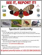 SpottedLanternflyFlyer-th