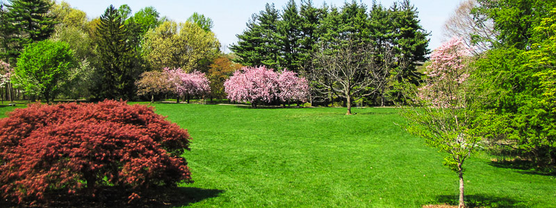 FA_April10_Great_lawn_in_Spring