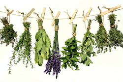 Dried_Herbs-th